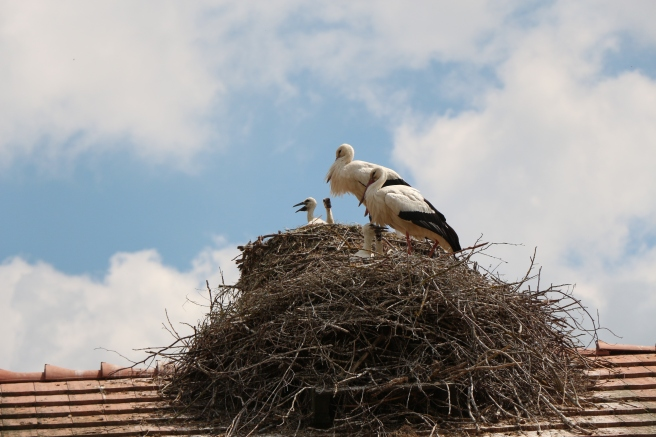 Stork families